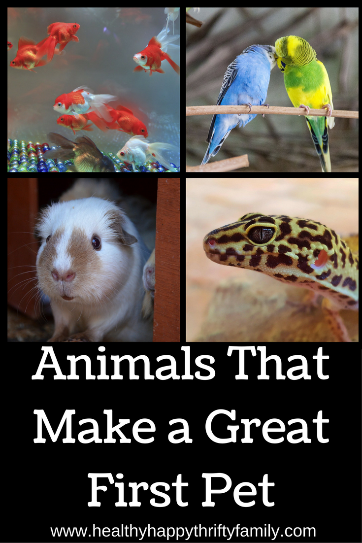 Animals That Make A Great First Pet Healthy Happy Thrifty Family