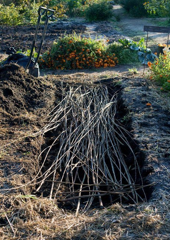 Lämpöpenkki aikaistaa viljelyä ja tuottaa runsaan sadon. Sen voi tehdä…