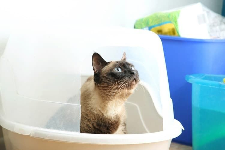The 25 Best Cat Litter Boxes And Pans Of 2019 Pet Life Today Best Cat Litter Cat Litter Box Pet Care Cats