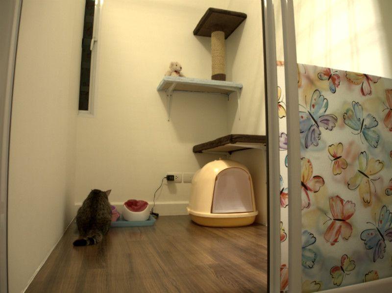 Cat Avenue โรงแรมแมว ฝากเล ยงแมว ห องส วนต ว