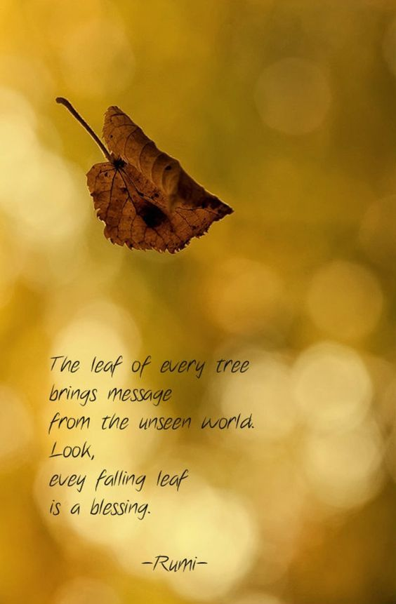 Rumi Quotes The Leaf Of Every Tree Brings Message From The Unseen