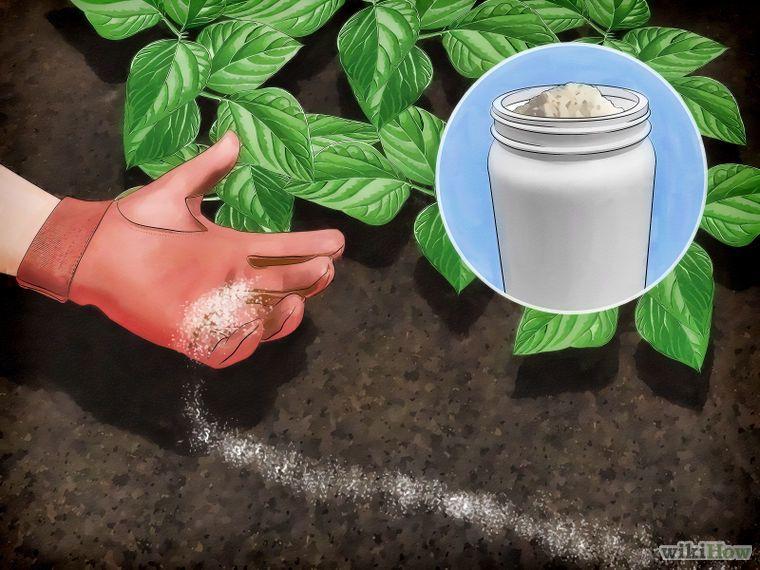 Get rid of garden slugs slugs in garden garden pests