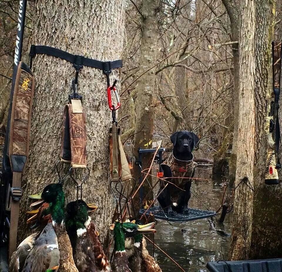 Black Dog Outfitters Arkansas