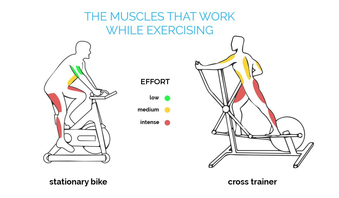 What Muscles Does A Stationary Bike Work Exercise Bike Benefits