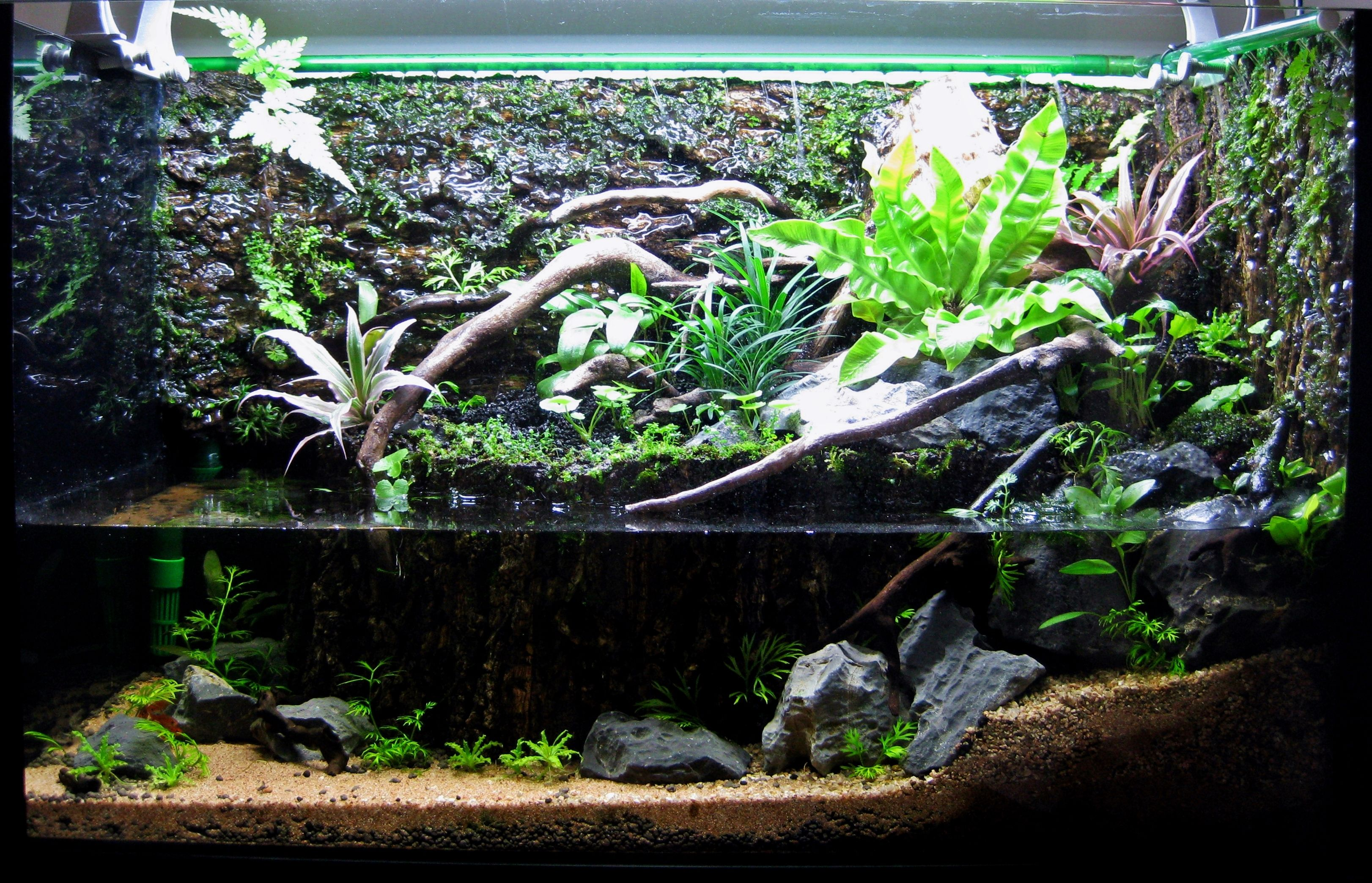 15g paludarium journal pets herps tropical for Waterfall fish tank