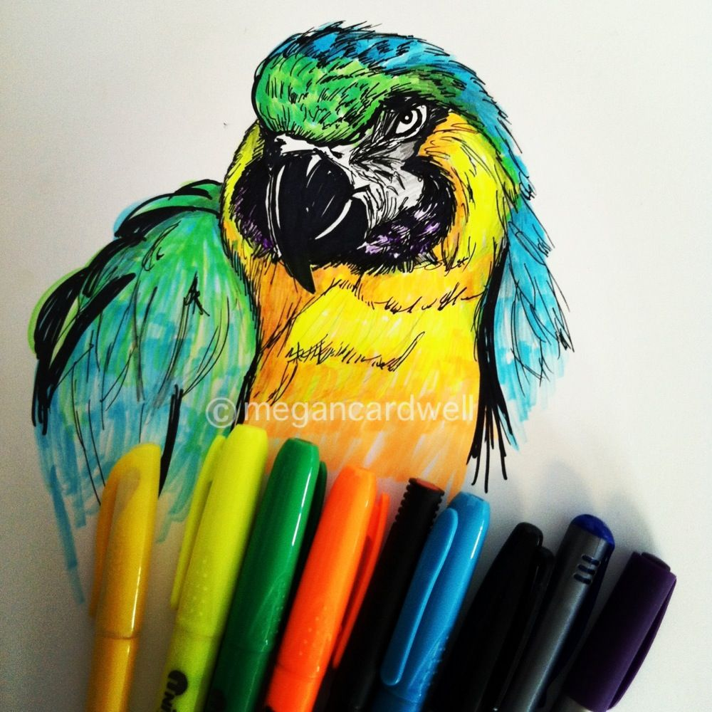 Macaw - 15minute sketch I did at lunch #hightlighter #art #birds ...