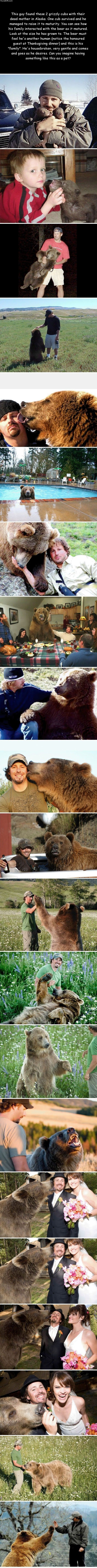 Hand raised grizzly bear.
