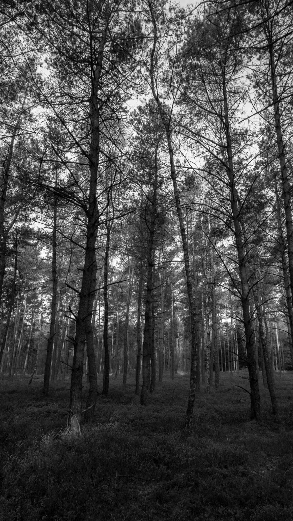 Forest Black And White Wallpaper Iphone Wallpapers Hd Black And White Wallpaper Iphone White Wallpaper For Iphone Black And White Wallpaper