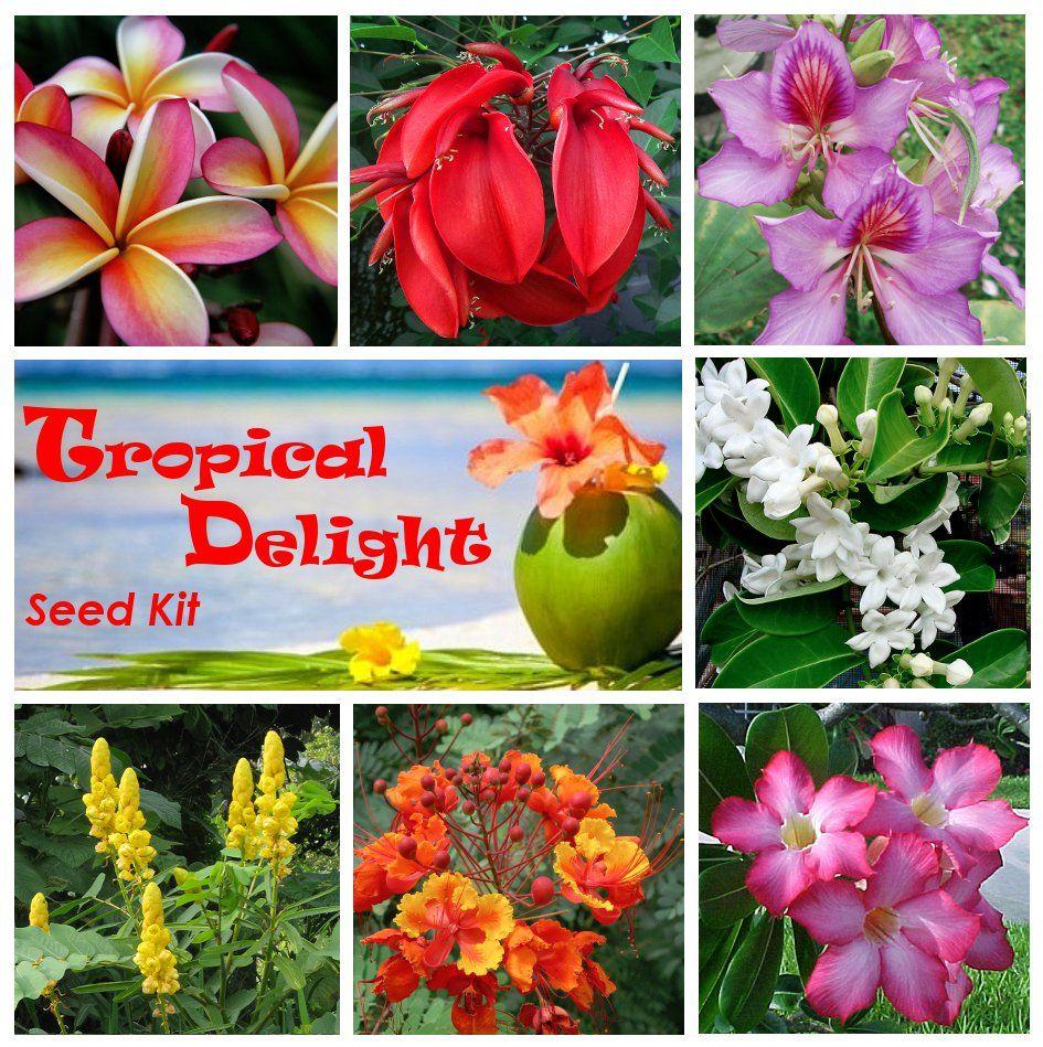 Tropical Seeds Gift #giftingseeds #tropicalflowers