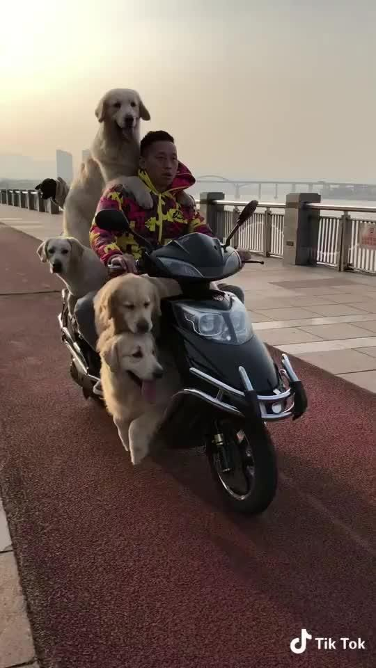 Doglovers On Tik Tok Including Musical Ly Global Video Community Funny Dog Videos Cute Animals Dog Gifs