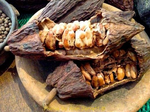 The cacao pods do not dry on the tree as one might imagine from this photo. They are harvested as they ripen, and the pulp and beans are removed. The beans are processed and put out to dry, much the same as coffee.