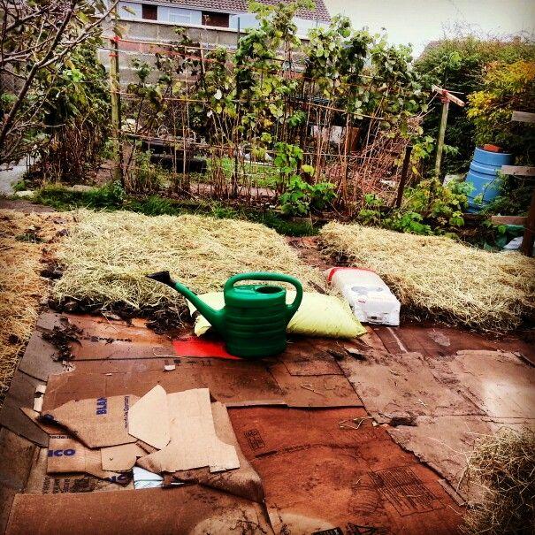 No Dig Garden Beds. Sheet Mulch/No Till/Lasagna. Made drom cardboard, leaves and hay!