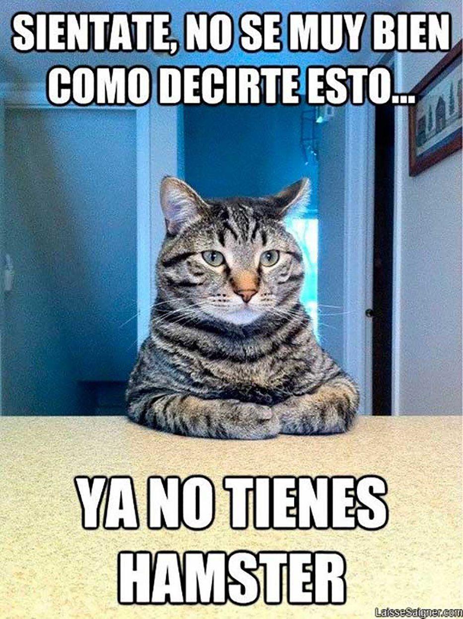Resultado De Imagen De Fotos De Gatos Memes Graciosos Memes Divertidos Chiste De Gatos