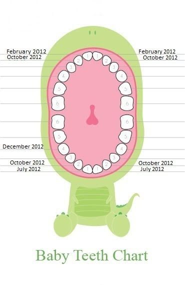 Baby Teeth Chart    Her Grow Xo Rache February Th St Tooth