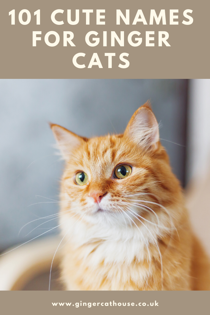 101 Terrific Tabby Cat Name Ideas For Your New Cat Or Kitten In 2020 Tabby Cat Names Girl Cat Names Cat Names