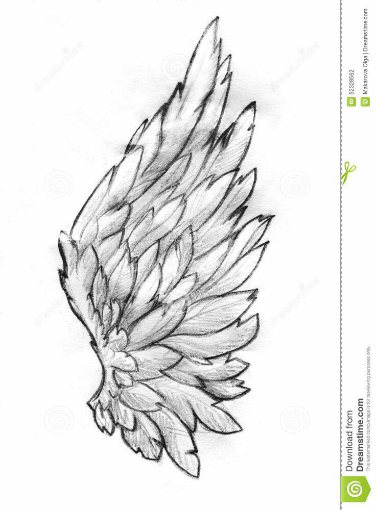 Photo about hand drawn pencil sketch of a single feathery bird or angel wing