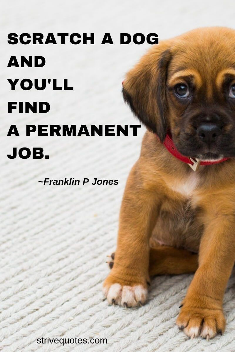 26 Funny Quotes Dogs Dog Training Inspirational Pets Dog Quotes Funny