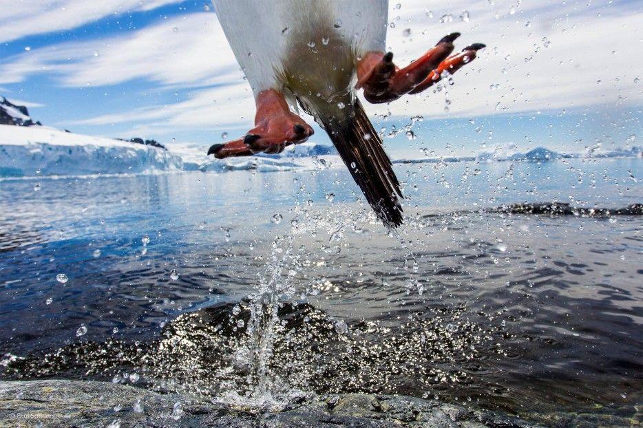 hienoja luontokuvia: äärimmäisen lyhyt suljinaika,pisarat ja hyppy näkyvät ilmaan pysähtyneinä