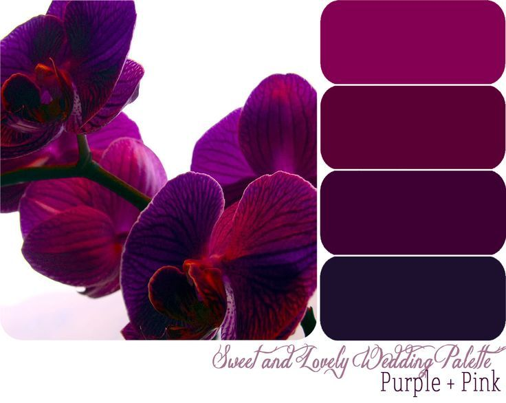 Purple Wedding Color Swatches