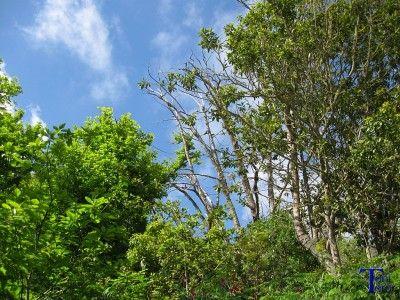 Partes altas de árboles