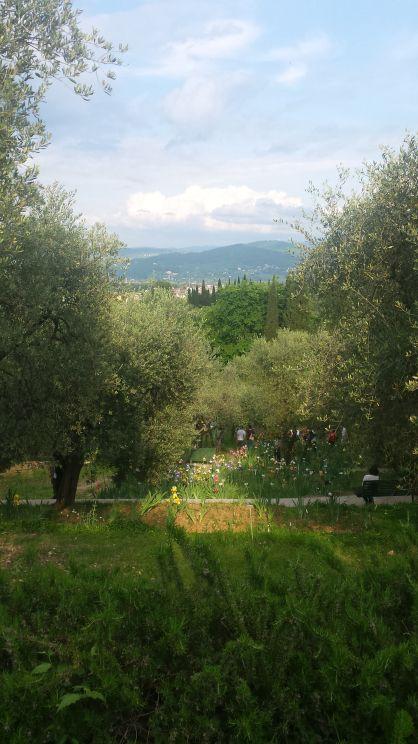 """Gli ulivi nel """"Giardino dell'iris"""" a Firenze."""