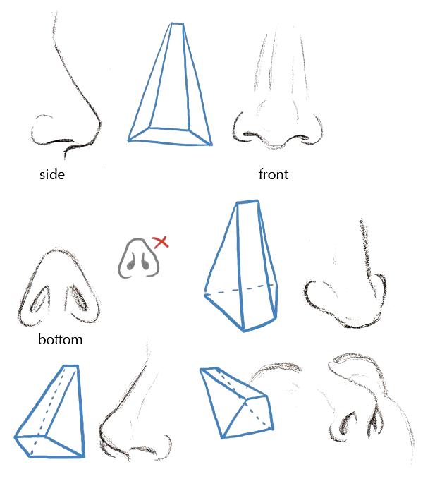 Fundamentos Del Rostro Humano Cgadictos Como Dibujar Una Nariz Dibujo Nariz Como Dibujar Nariz