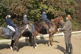 Afbeeldingsresultaat voor manege paarden