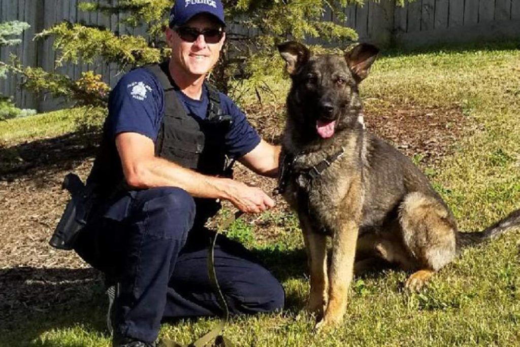 B C Rcmp Dog Hammer Helps Police Nab Suspects Find Lost Hiker