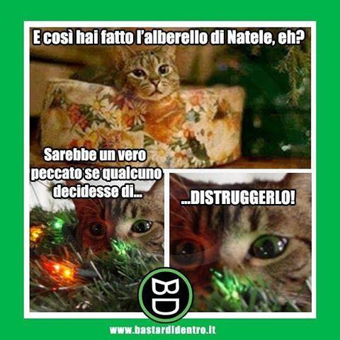 Albero Di Natale Con Foto Amici.Un Albero Di Natale Con I Minuti Contati Tagga I Tuoi