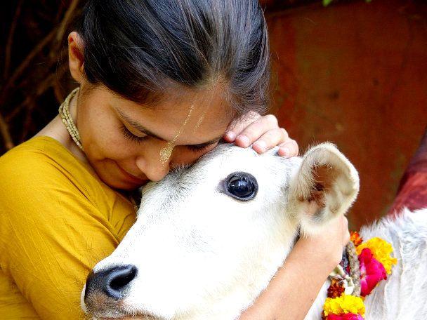 Tidak ada Kurban Sapi di India