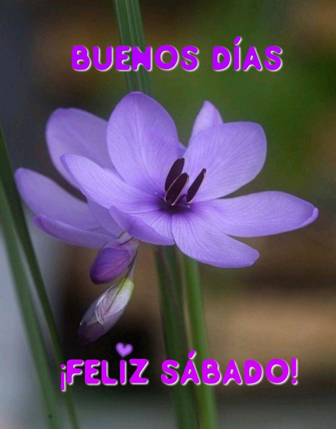Pin De Erika Barahona En Saludos Y Mas Con Imagenes Buenos