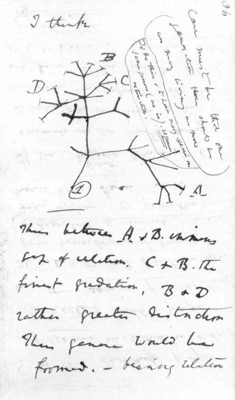 Le Corail De Darwin Le Divan Fumoir Bohemien Tatouage Evolution Charles Darwin Arbre Phylogenetique