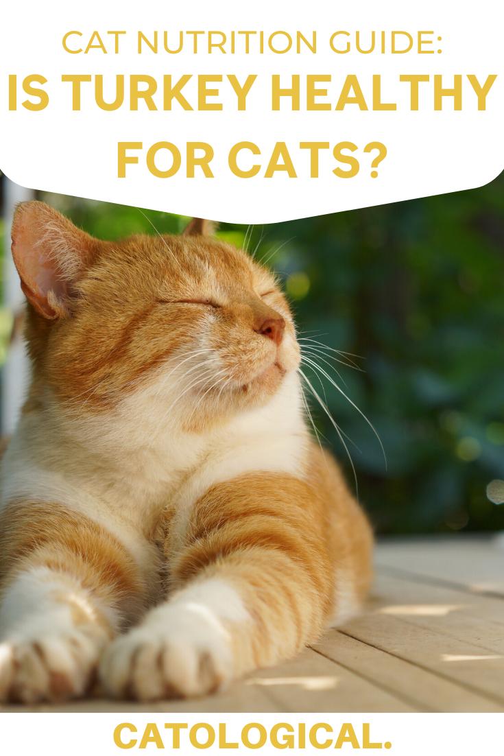 Combi Kitten Food Chart Kitten Food Feeding Kittens Kitten Care