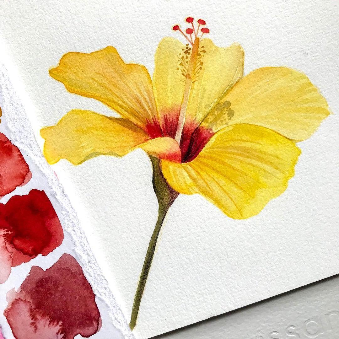 Watercolor Yellow Hibiscus Fleurs Hibiscus Photo Fleurs Dessin