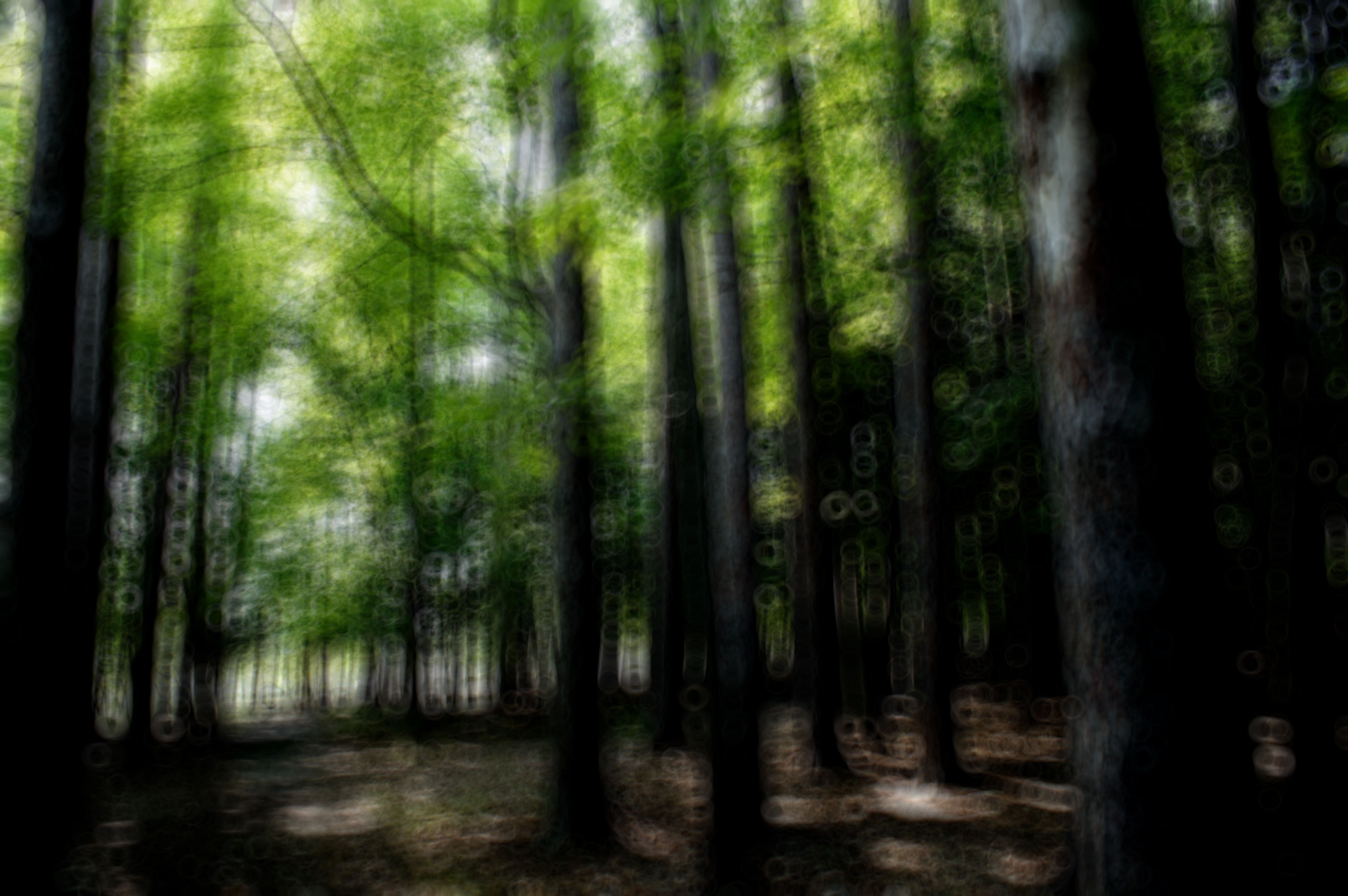 SERIE TREES IN MOTION_Deep Forest