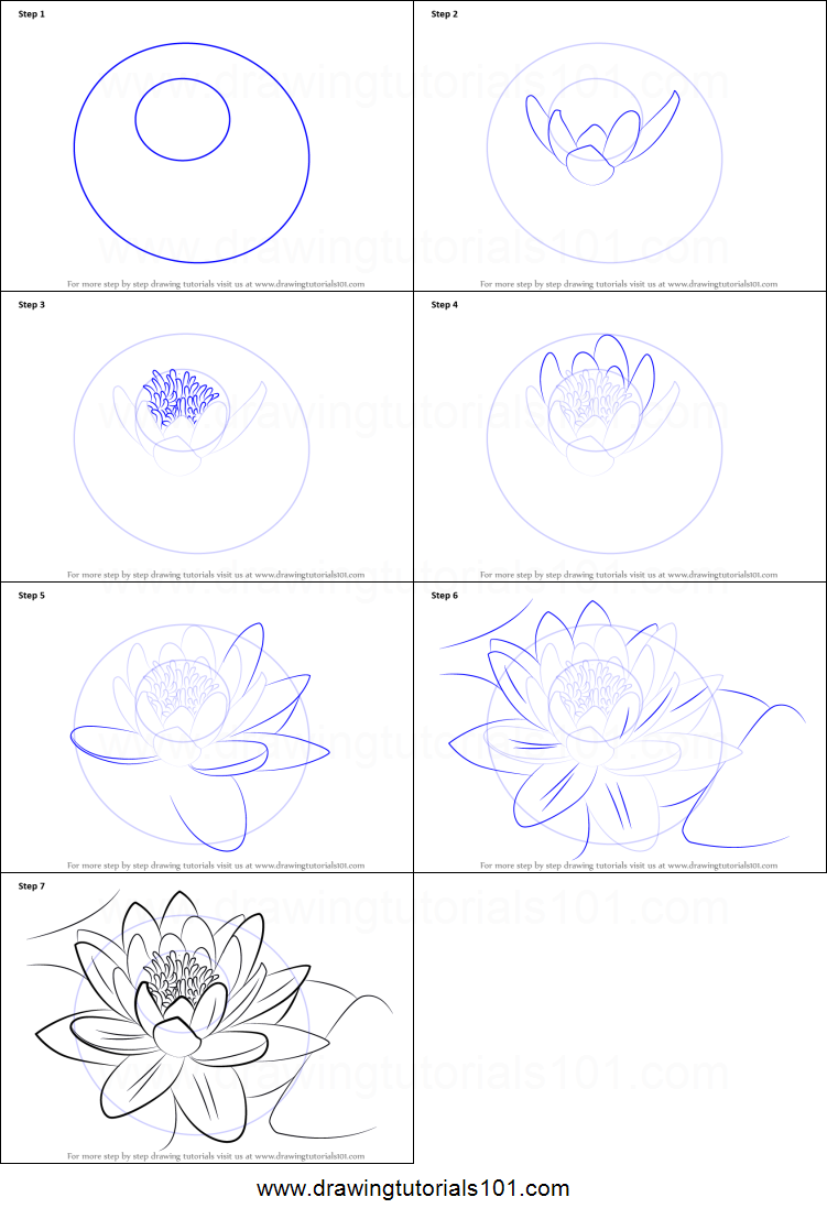 How to Draw a Water Lily printable step by step drawing