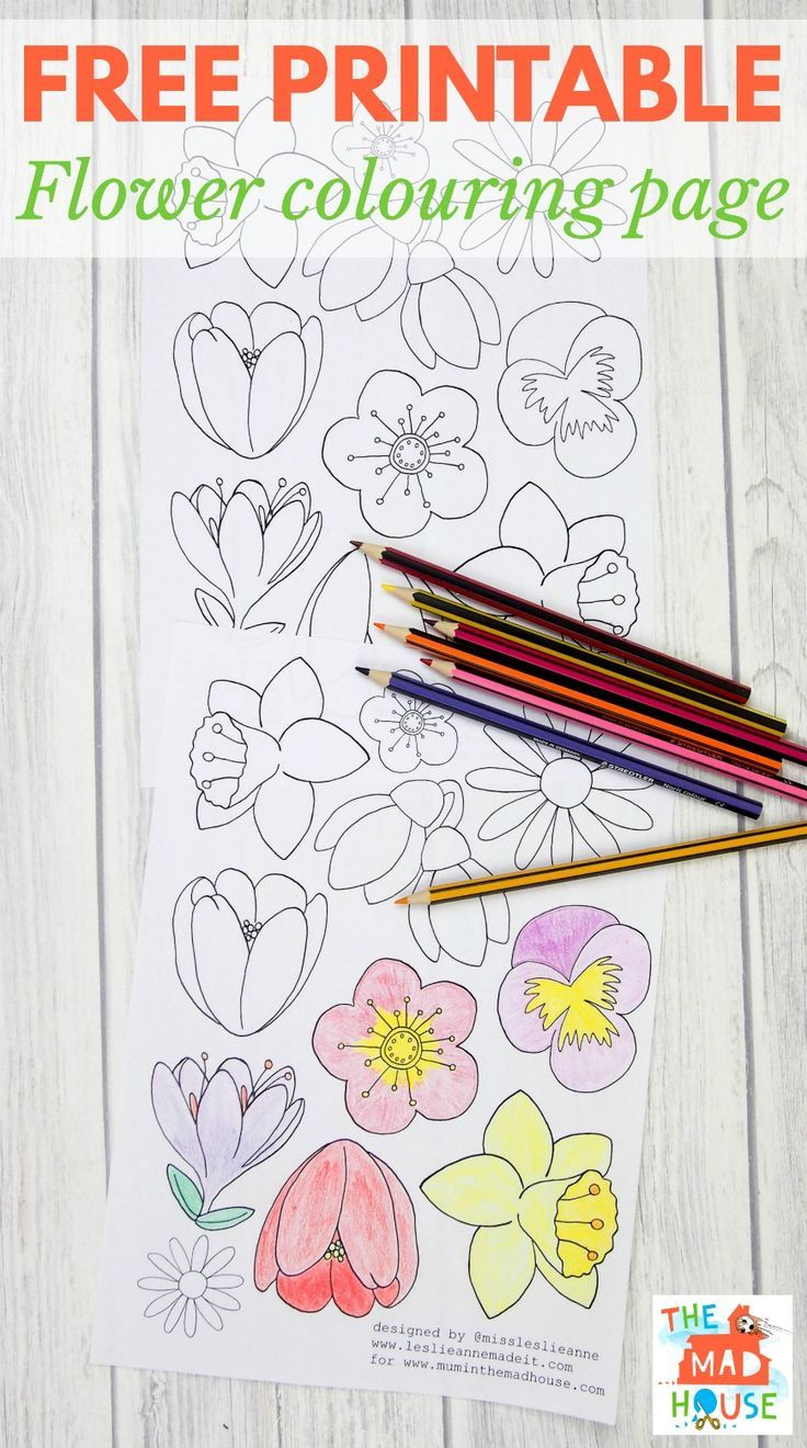 Free flower colouring page for adults art activities and