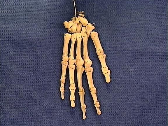 osteology quiz