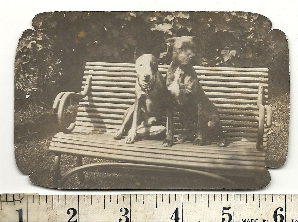 Vintage Photo Two Handsome Dogs Best Pals on Park Bench