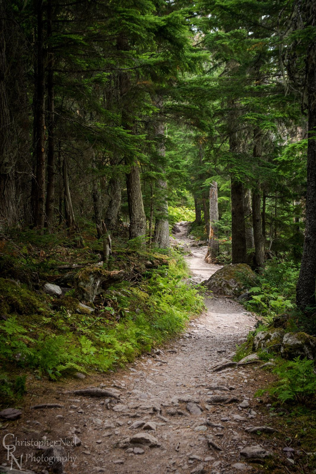 Avalanche Trail In Glacier National Park Mt 20150804crn Forest Trail Beautiful Forest Paths