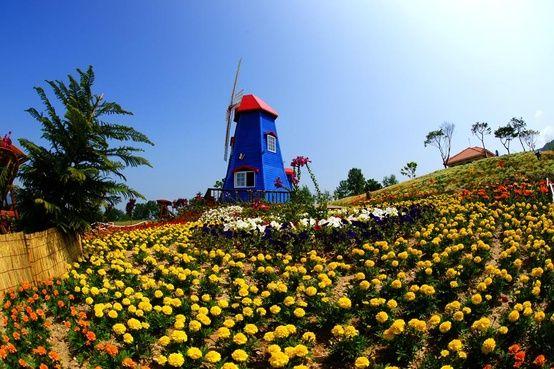 flower,flower,flower,flower,