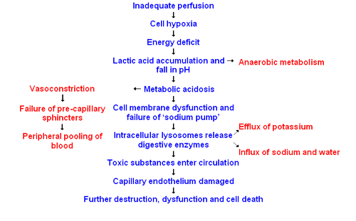 Septic Shock Pathophysiology Diagram Emt Pinterest Septic