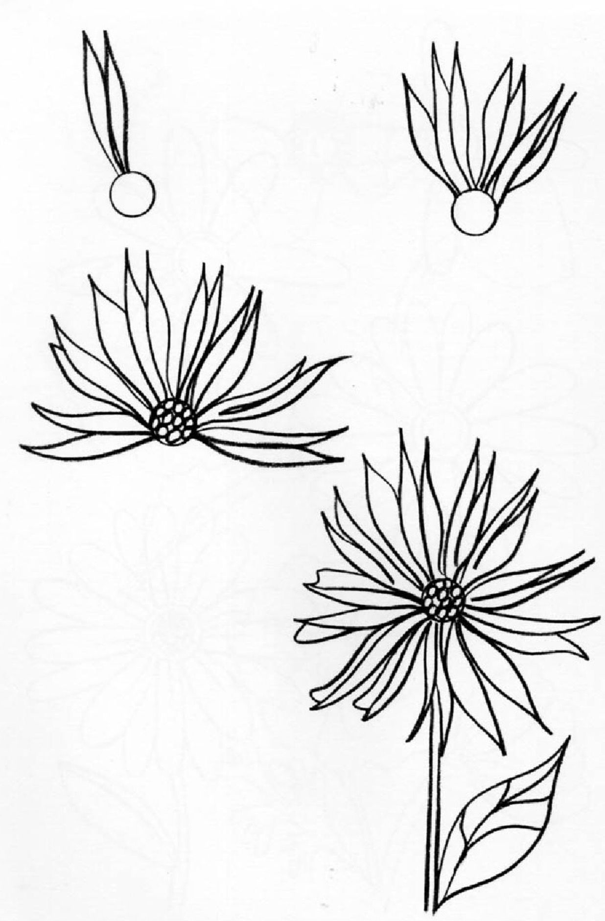 Pin by Lori Gagnon on How To Draw (With images) Flower