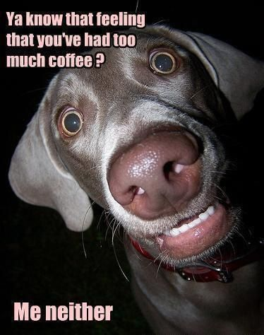 No such thing as too much coffee... unless you NEED sleep. LOL