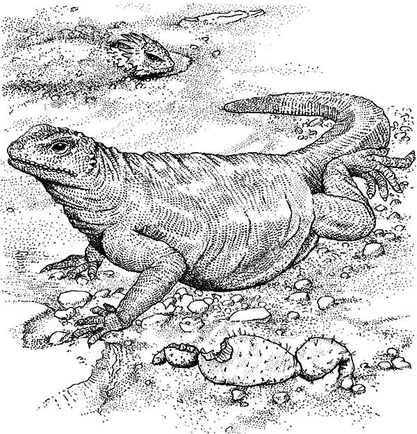 Komodo Dragon Full Stomach Coloring Pages Download Print Online Coloring Pages For Free Dragon Coloring Page Online Coloring Pages Komodo Dragon