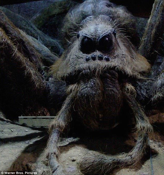 Furry \'Harry Potter\' spider is named after Aragog | Pinterest | Wolf ...