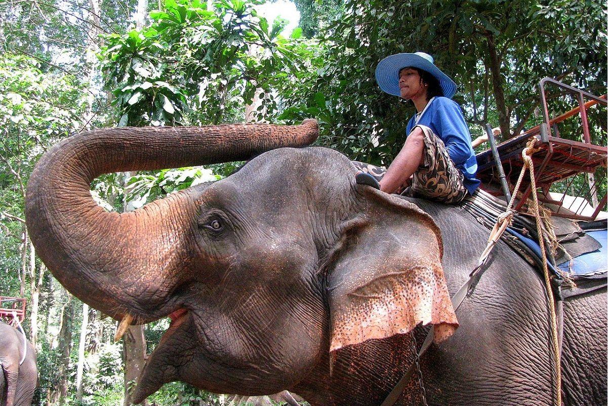 Quali sono le escursioni più entusiasmanti da fare a phuket in