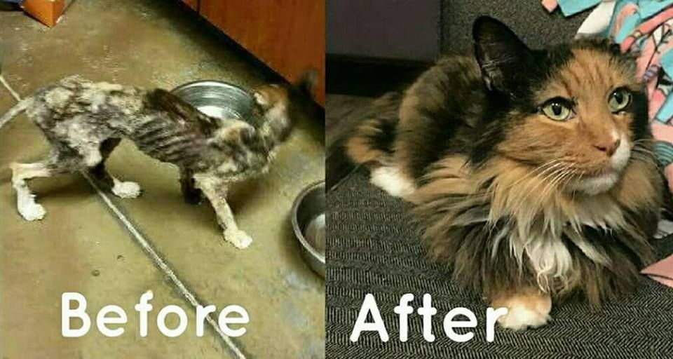 14 Year Old Cat Weighed Same As A Kitten Today She Is Playing Old Cats Why Do Cats Purr Cat Breeds