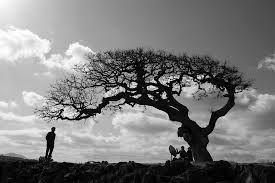 팽나무 - Google 검색