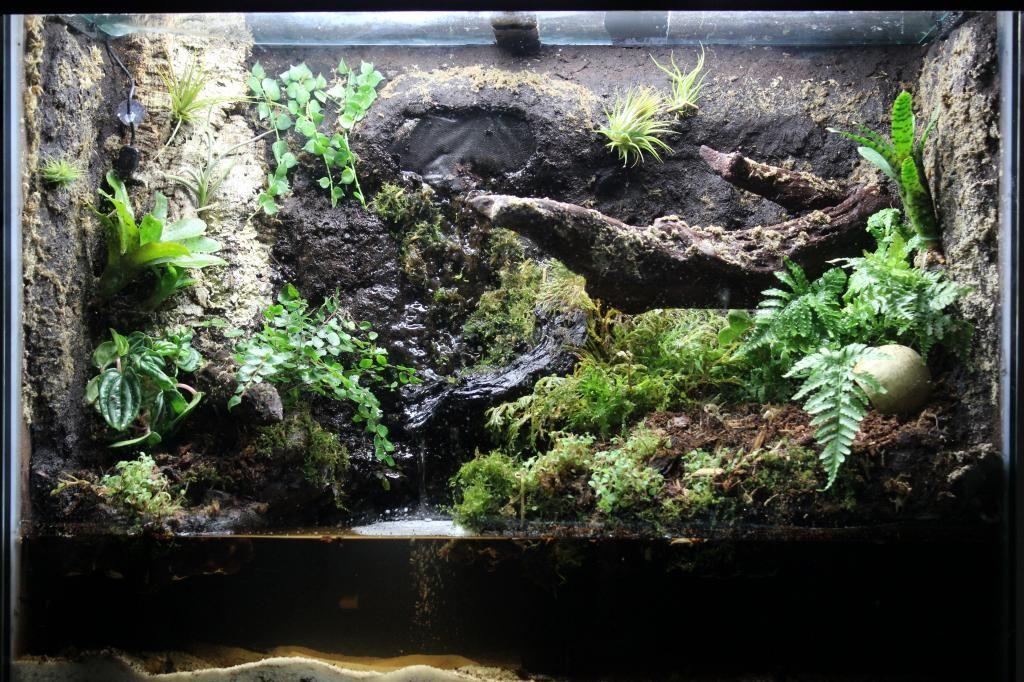 Paludarium for geosesarma crabs. Build log includes ... 10 Gallon Paludarium